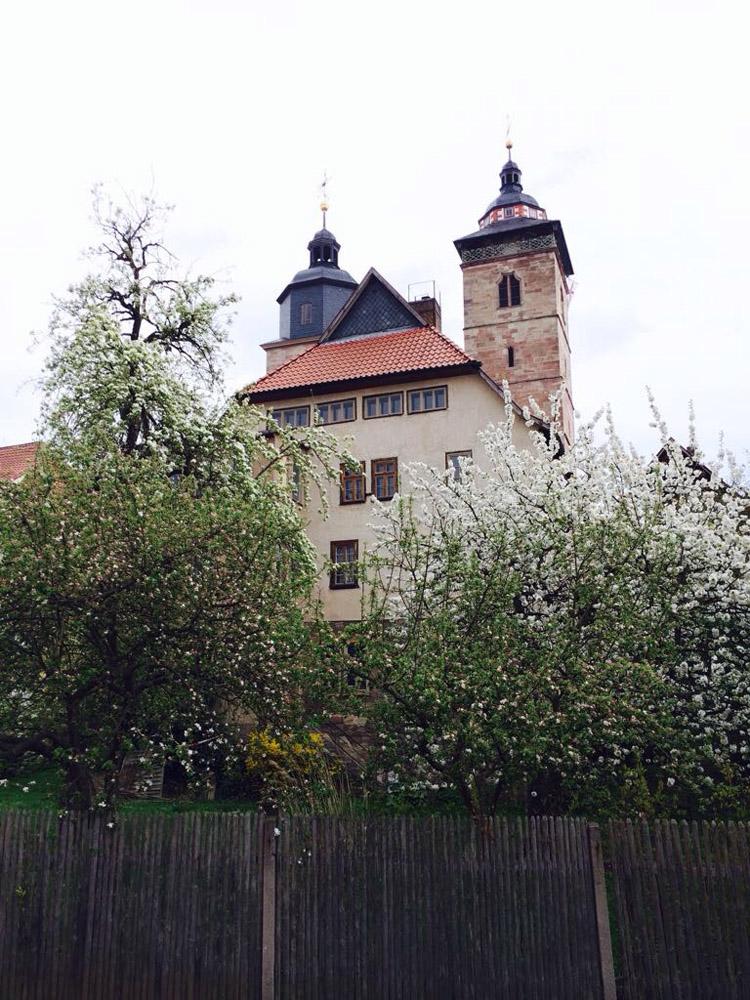 Frühling 2017_Schmalkalden_golden cage