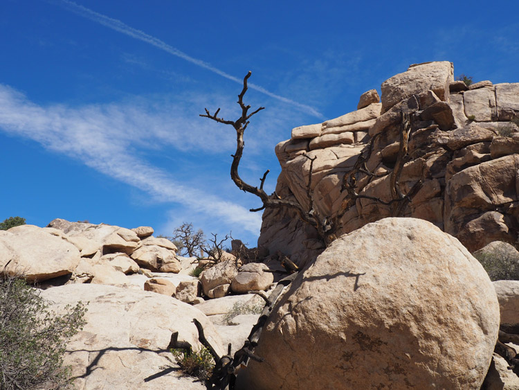 Joshua Tree National Park_California_golden cage_7