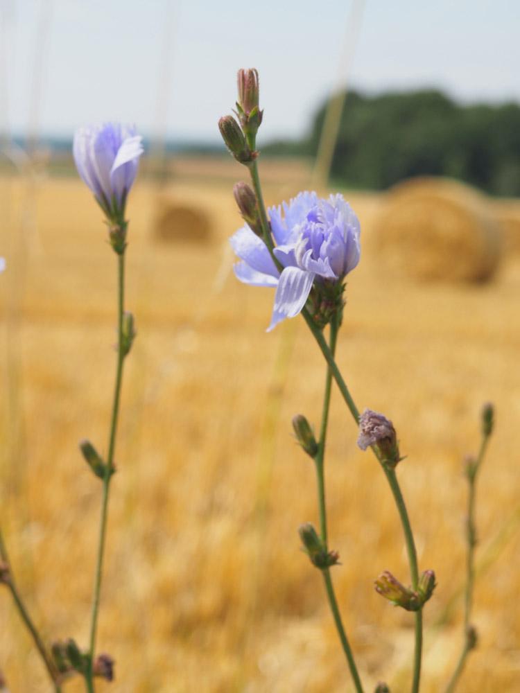 Trägerkleid kombinieren_Streifenbluse_Mes Demoiselles_Kleid 9 Seed_golden cage_5
