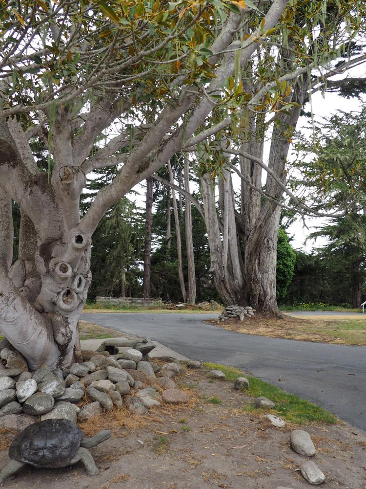 Butterfly Grove Inn_Pacific Grove_ Kalifornien_golden cage_2
