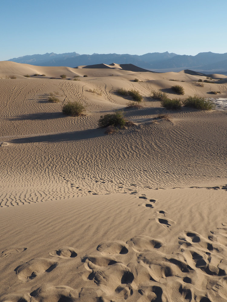 Mesquite Flat Sand Dunes_Death Valley_Kalifornien_golden cage_2