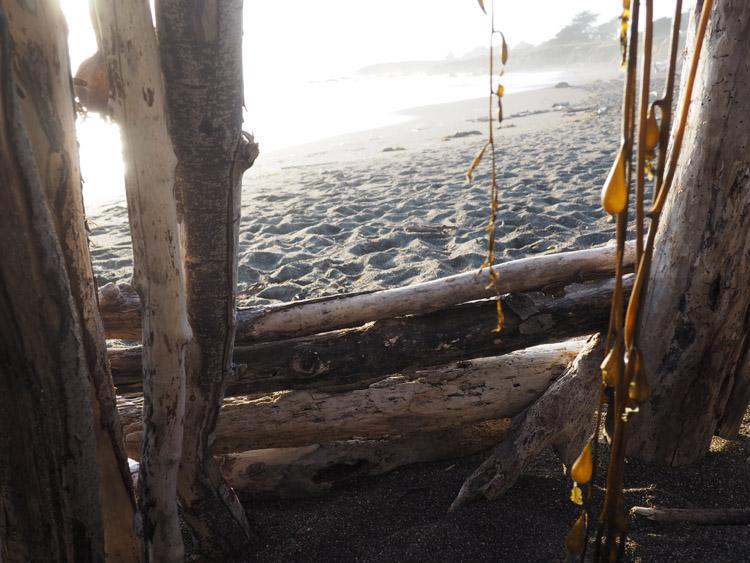 Gehen oder Bleiben_golden cage_Cambria_Moonstonebeach_California_2